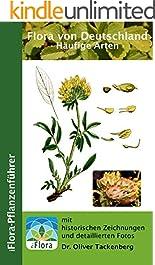 Flora von Deutschland: Die häufigen Arten (iFlora-Pflanzenführer 7)