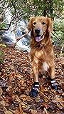 Bark Brite Todas Las Botas De Perro Protector De Neopreno Resistente A La Pata con Straps Reflectante (XL (4X3.75 Pulg.)) Viajan Estuche De Cremallera Incluido