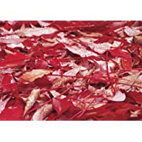 FILZ 4 St Tischset Platzdeckchen Platzset Pink 42x30 cm mit 4 Glasuntersetzer