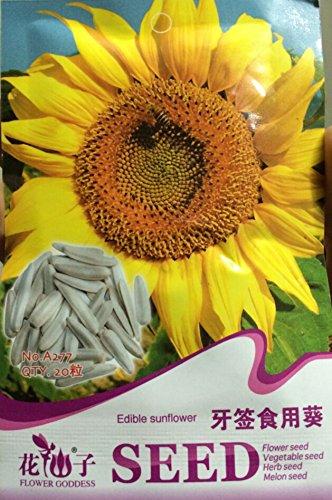 Heirloom comestibles Graines de tournesol, blanc long pack d'origine, 20 graines / Pack, Graines Tasty Fleurs décoratives # A277