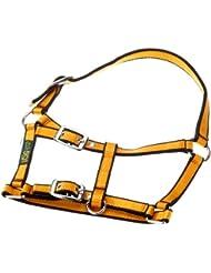 USG FoaLarge Licol pour poney entièrement ajustable (Orange/noir)