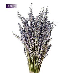 Ramo de flores secas de lavanda natural con tallos frescos y secos para decoración del hogar, manualidades, regalo, boda