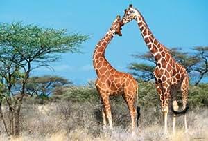 Hasbro - MB Puzzles - Puzzle 500 Pièces Géo - Le calin des girafes