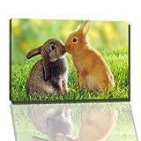Hasen kuss Bild auf Leinwand -- 80 x 60 cm fertig gerahmte Kunstdruckbilder als Wandbild - Billiger als Ölbild oder Gemälde - KEIN Poster oder Plakat