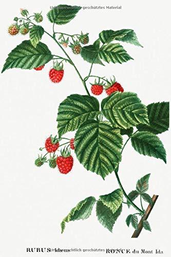 """Designer Notizheft: liniert mit Motiv """"Himbeere (Rubus idaeus)"""" von Pierre-Joseph Redouté, Notebook, Schreibheft etwa A5 (15,3 x 22,9 cm) mit ... stilvolle Geschenkidee für Gartenliebhaber"""