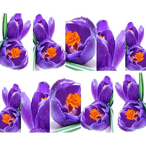 Belle fleur de transfert de l'eau Nail Art Autocollants pour nail art décoration