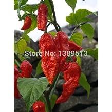 200pcs Red Semillas Naga Jolokia Naga Jolokia del fantasma pimienta de chiles calientes * 900K-1.1M + SHU-Libre!