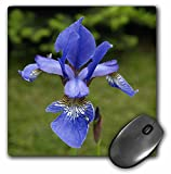 Houk Photography - Flowers - Blue Lilies - Macro - MousePad (mp_202400_1)