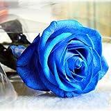 Bluelover 50 Pezzi Blu Rose Semi Fai Da Te Casa Giardino Dec