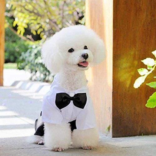 Everpert Haustier Hund Hochzeit Anzug Welpen Fliege Mantel Hosen Prinz Overall Kleidung (XL)