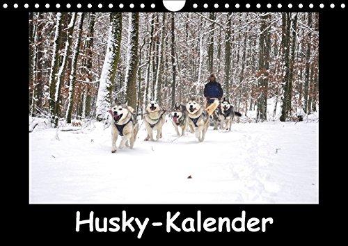 Husky-Kalender (Wandkalender 2018 DIN A4 quer): Sibirische Huskies (Monatskalender, 14 Seiten ) (CALVENDO Tiere) [Kalender] [Apr 01, 2017] andiwolves, k.A.
