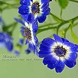 I semi di fiori Flower Garden Seeds10Seeds / bag giardino della casa vecchio impianto di moda francese Fiore lilla albero arbusto