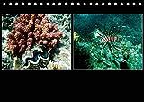 Das Rote Meer ? 2020 (Tischkalender 2020 DIN A5 quer): Bunte Artenvielfalt und Unterwasserlandschaften an den Riffen im Roten Meer. (Monatskalender, 14 Seiten ) (CALVENDO Tiere) -