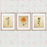 Pack de láminas AIR. Posters con imágenes de botánica. Decoración de hogar. Láminas para enmarcar. Papel 250 gramos alta calidad