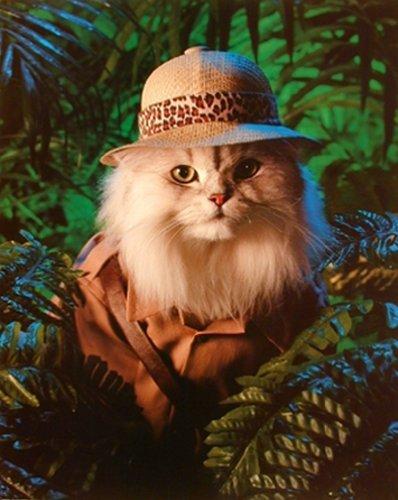 Safari-Motiv: Katze Kätzchen-Tier Poster/Kunstdruck (40 x 50)