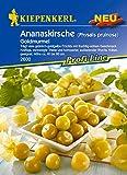 Obstsamen - Ananaskirsche Goldmurmel von Kiepenkerl