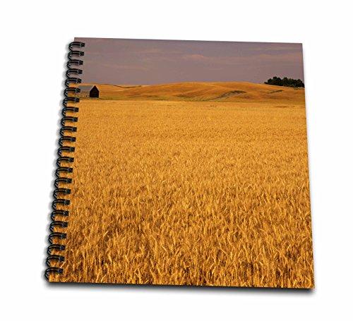3drose-db-96249-3-idaho-genesee-farm-wheat-field-and-barn-us48-jwi2577-jamie-and-judy-wild-mini-note