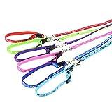 Da.Wa 1 Set Hunde Hundehalsband und Hundeleine für Teddy/Chihuahua/Zwergpinscher,120cm,Nylon,Zufall Farbe,XS