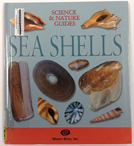 sea-shells-of-the-united-states-and-canada