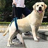 Hilfsgurt Haustier Zubehör, Pet Back Leg Deformity verletzt alten Hund Treppe xl