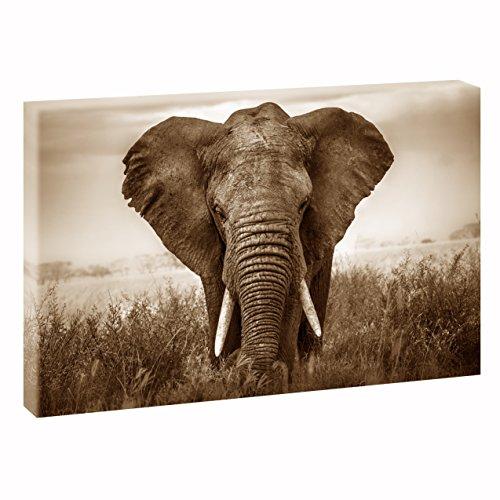 Elefante | v1720319| imágenes lienzo | pared Imagen