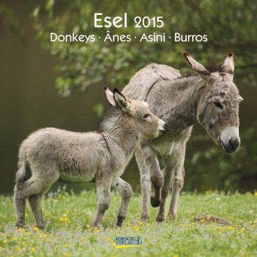 Esel 2015. Broschürenkalender