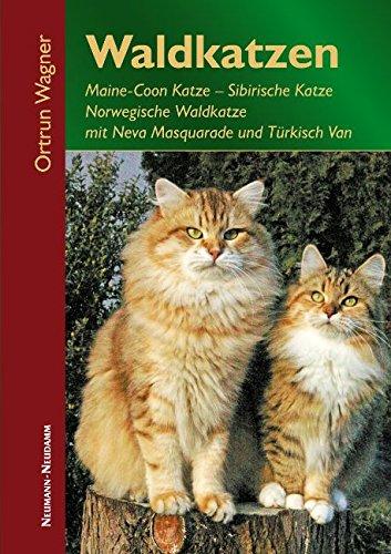 Waldkatzen: Maine-Coon Katze, Sibirische Katze, Norwegische Waldkatze mit Neva Masquarade und Türkisch Van - Türkisch-fell