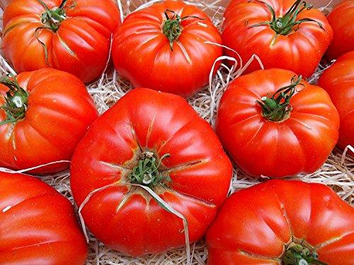RWS 10 semillas de tomate RAF variedad de Super Marmande, de tomate de la herencia española, desde Andalucía, sur de España