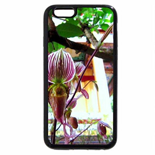 iPhone 6S Plus Case, iPhone 6 Plus Case, Paphiopedilum Slipper orchids (Paphiopedilum Orchid)