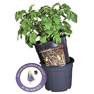 Agralan Anzuchttöpfe für Kartoffeln, Kartoffeln leicht anzüchten, 3er-Packung, geeignet für die Terrasse