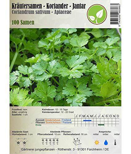 Kräutersamen - Koriander/Coriandrum sativum - verschiedene Sorten(Jantar/Coriandrum sativum)