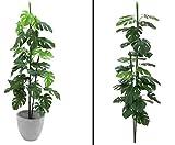 Splitphilodendron, günstige Kunstpflanze, Höhe 150cm - künstliche Pflanzen Kunstpflanzen