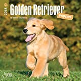 Golden Retriever Puppies 2018 Calendar