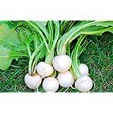 Arco iris de remolacha cylindra semilla comestible plantas en maceta, vehículos orgánicos raíz de remolacha Bonsai Semilla de la estación de siembra 50 PC 5