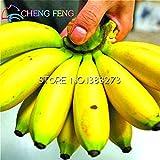 Pinkdose® 30 / bag Bananenbaum Pflanzen Obst Bonsai Seltenes Kleiner Mini Hainan chinesische Bananenpflanzen Musa Bonsai Zwerg Basjoo Außen Garten * p: Weiß
