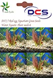 DCS(037) 5 Red egg Aquarium Grass Seeds ...