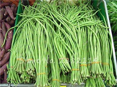 10 Pcs Multi Color long haricots Graines santé Graines de légumes biologiques, la croissance naturelle pour jardin délicieux savoureux 9 Bonne