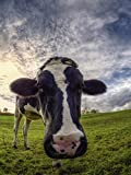 Artland Qualitätsbilder I Poster Kunstdruck Bilder 30 x 40 cm Tiere Haustiere Kuh Foto Grün B5WY Lustige Kuh