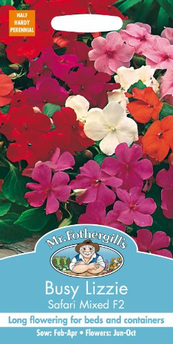 mr-fothergills-pictorial-packet-flower-busy-lizzie-safari-mixed-f2-60-seeds