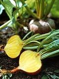 Gelbe Bete 'Golden' (Beta vulgaris) Samen 100 Samen Gelbe Rübe Beete Rahne Rohne