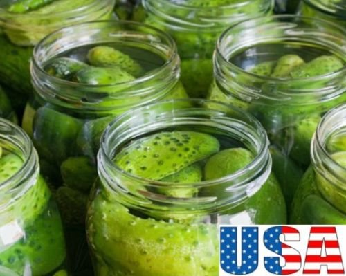 USA SELLER Wisconsin SMR Décapage graines de concombre HEIRLOOM NON OGM