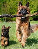 Notebook: German Shepherd Dog Dogs Puppy Puppies 8.5' x 11' 150 Ruled Pages