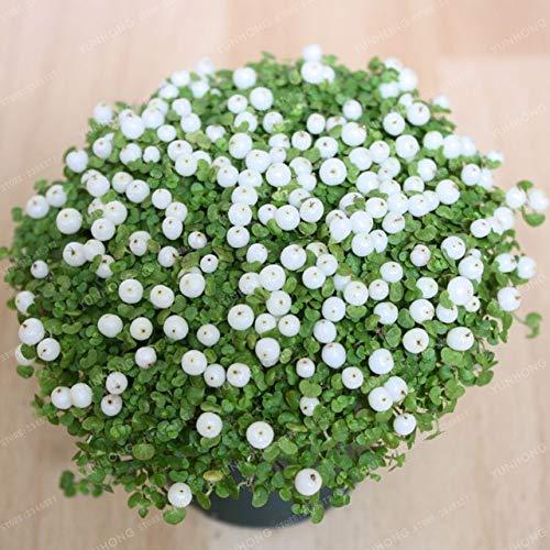 Pinkdose Lampe Bead Herbe Bonsai Fleur Bonsai Rouge Jardin d'ornement Easy Grow vivace Bonsai plante pour jardin 100 pièces/sac: 1