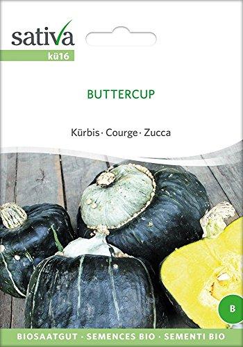 Kürbis Buttercup | Bio-Kürbissamen