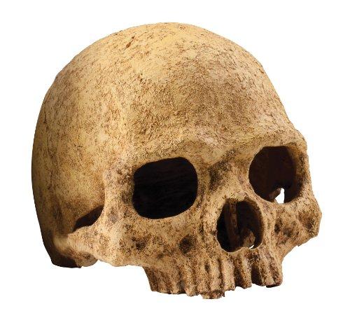 Exo TerraCueva Cráneo de Primate
