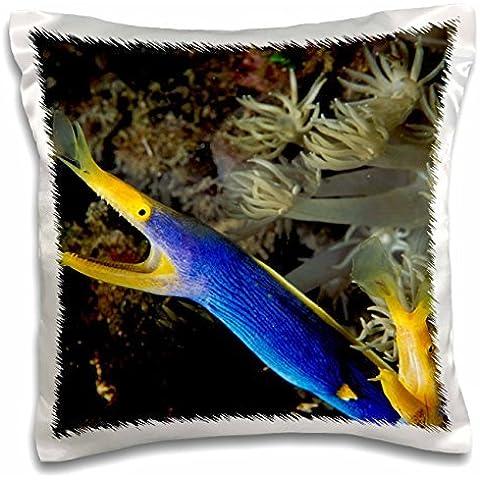 Marine Life - Indonesia, Sulawesi, Blue ribbon eel marine life - Michele Westmorland - 16x16 inch Pillow Case