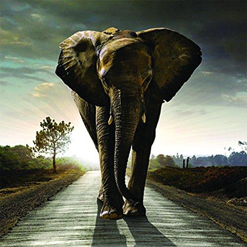 Hautnah Linsenraster 3D Grußkarte Elefant Stomp