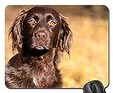Gaming-Mauspads, Mauspad, Hund klein Munsterlander Brown Reinrassiger Hund