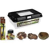 Reptiles Planet Kit avec Terrarium Insecte en Plastique pour Cétoine 38 x 24 x 14 cm Taille XL/Low