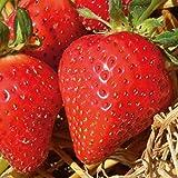 Hänge-Erdbeere, Erdbeere fü...